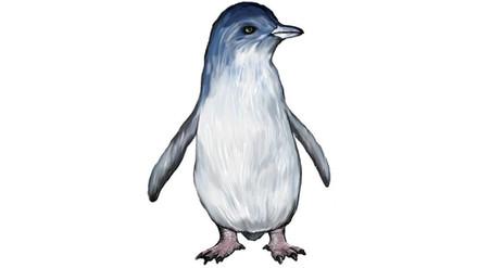 Descubren un pingüino enano de 34 millones de años de antigüedad