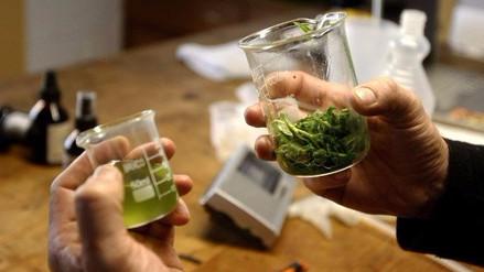 Video | ¿En qué casos se puede usar el cannabis medicinal?