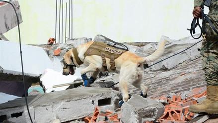 Hay pocas esperanzas de hallar sobrevivientes entre los escombros
