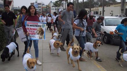 Por 2 días funcionarán 587 puntos de vacunación canina en 38 distritos