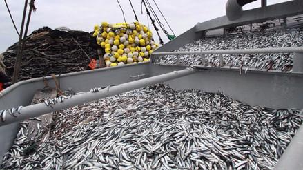 Segunda temporada de pesca de anchoveta empezará en noviembre
