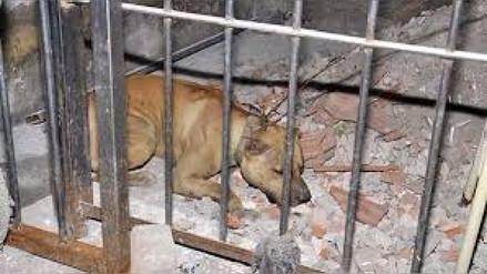 Chiclayo: perro pitbull atacó a madre de familia en Monsefú