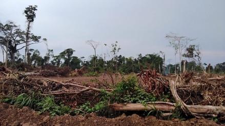 Los bosques de Ucayali se han convertido en el botín de los traficantes de tierras