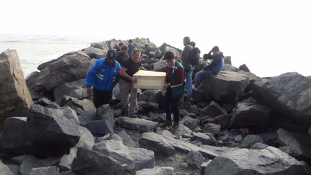 Miraflores: Rescatan cría de lobo marino