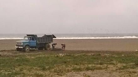 Huaral: Volquetes sacan arena de playa en Aucallama