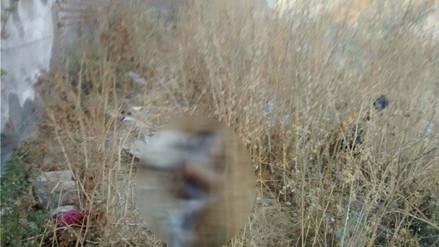 Hallan cadáver de mujer en quebrada de Alto Selva Alegre