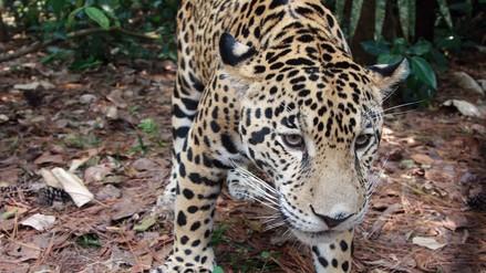 La vida privada de los animales en Madre de Dios