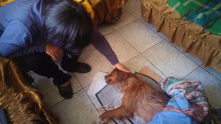 Denuncian envenenamiento masivo de animales en Cusco