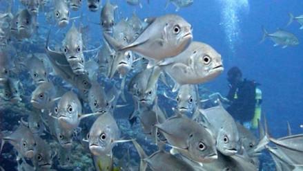 Los peces son capaces de sentir emociones, según un nuevo estudio