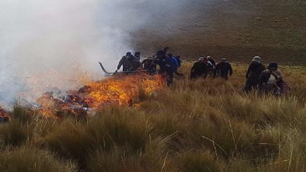 Incendio forestal afecta 30 hectáreas del bosque de pinos en Chota