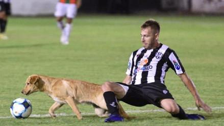 ¡Insólito! Un perro le cometió dura falta a un jugador en Argentina