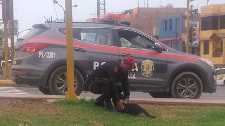 Twitter | Un policía rescató a un perro que fue atropellado en la av. Gambetta