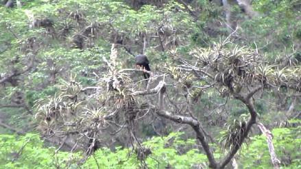 Laquipama es el refugio para conectarte con la naturaleza lambayecana
