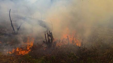 Coer reportó 2000 hectáreas de bosques y cultivos arrasadas por incendios