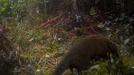 Cerros Orientales de Bogotá: los animales que sorprendieron a científicos