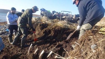 Desentierran en Siberia el esqueleto de enorme vaca marina extinta