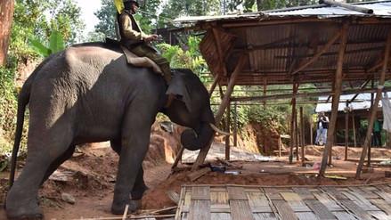 Elefantes desalojan a invasores de un bosque en la India