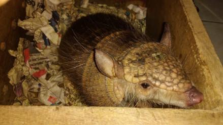 Comercio ilegal de fauna en el Perú: 4 historias para entender esta amenaza