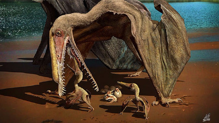 Más de 200 huevos de pterosaurio fueron hallados al noroeste de China
