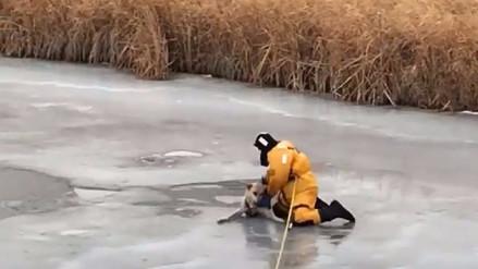Video | Bombero rescata a un perro atrapado en un río congelado