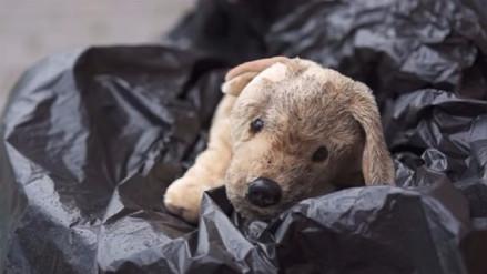 ¿Por qué las mascotas no son un regalo de Navidad? Este video nos lo explica