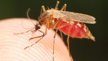 La vacuna contra el dengue se debe evitar en personas no diagnosticadas