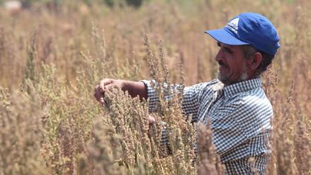 Arroceros peruanos piden arancel fijo mayor al 46% para el arroz importado