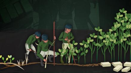 Aumentan cultivos de coca en el VRAEM y el Alto Huallaga