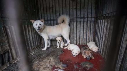 Más de 170 perros fueron rescatados de una granja de carne en Corea del Sur