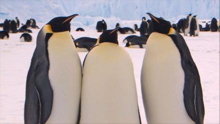 Pingüinos gigantes habitaron Nueva Zelanda en la prehistoria