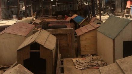 Piden clausurar refugio donde perros son criados en malas condiciones