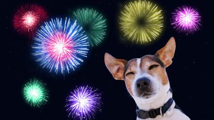 Aprende cómo cuidar de tu mascota durante las fiestas de fin de año