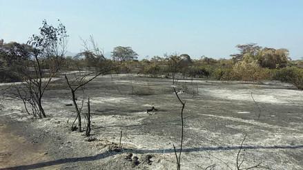 Más de 20 incendios forestales se registraron durante el año en Lambayeque