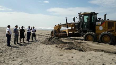 Limpian playas lambayecanas para recibimiento del año nuevo