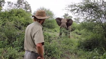 Video | Guía turístico frenó la embestida de un elefante salvaje con la mirada