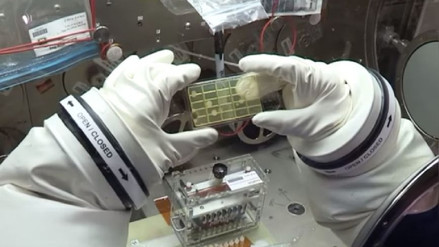 Astronautas de la NASA identifican microbios en el espacio por primera vez