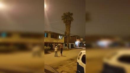 Una palmera está a punto de caer en Tablada de Lurín