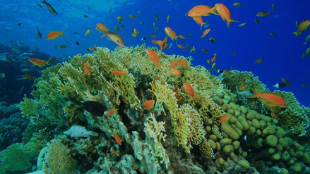 Qué son las zonas muertas del océano y por qué se multiplican