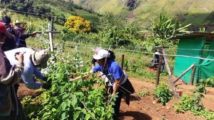 Invertirán más de 34 millones de soles en dos proyectos de riego en Kañaris