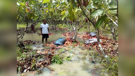 Satipo: desborde de río Ene dejó unas 200 viviendas inundadas