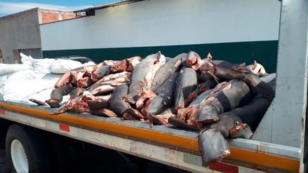 Abandonan al menos 86 tiburones muertos en una carretera de México