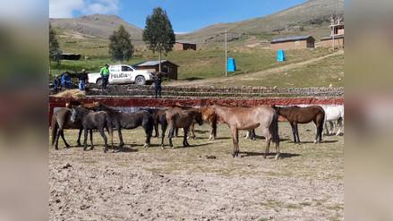 Intervienen a dos personas por hurto de caballos en Chumbivilcas