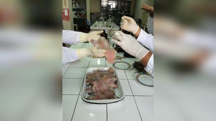 Trujillo: Incautan 15 kilos de pescado en mal estado de ex Mayorista
