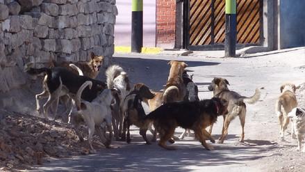 A cuatro se incrementa los casos de rabia canina en Arequipa