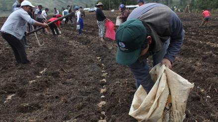 Las seis regiones productoras de papa sin paro agrario