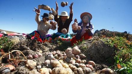 Agricultores de papa acatan paro este viernes en Otuzco