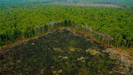 La Amazonía peruana perdió más de 143,000 hectáreas en 2017
