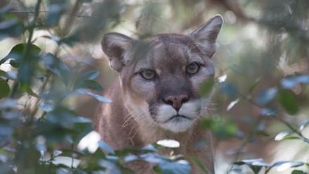 Amigo, no enemigo: los beneficios de los depredadores y carroñeros
