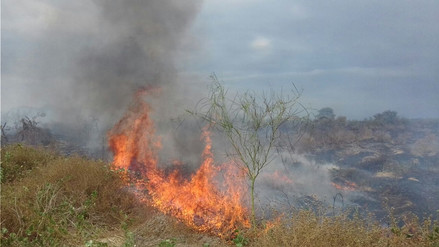 Lambayeque: 12 incendios forestales afectaron 20 hectáreas de cultivos