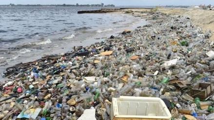 Uso del plástico, una relación tóxica que amenaza a la fauna marina